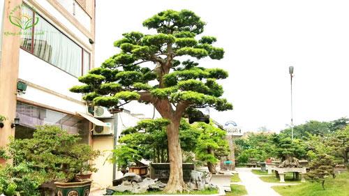 trồng cây cảnh trước nhà theo phong thủy